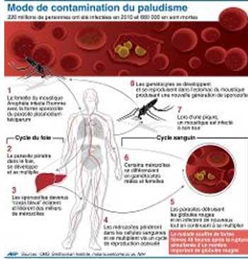 jpg_palu-vaccin.jpg
