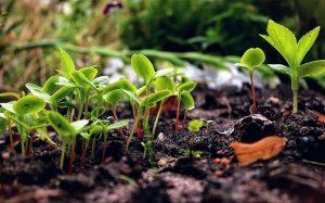 L'agroécologie est parfaitement en phase avec les traditions agricoles africaines